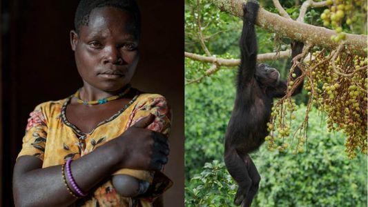 «Vivo con miedo constante»: los enfrentamientos entre humanos y chimpancés en la Uganda rural