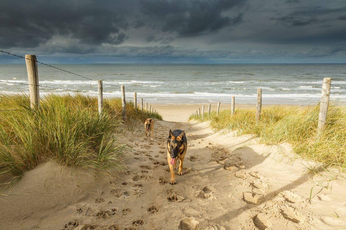 Imagen de dos perros caminando desde Noordwijk Beach en los Países Bajos