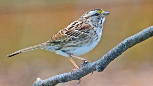 Vinculan la drástica disminución de las aves cantoras a los insecticidas neonicotinoides