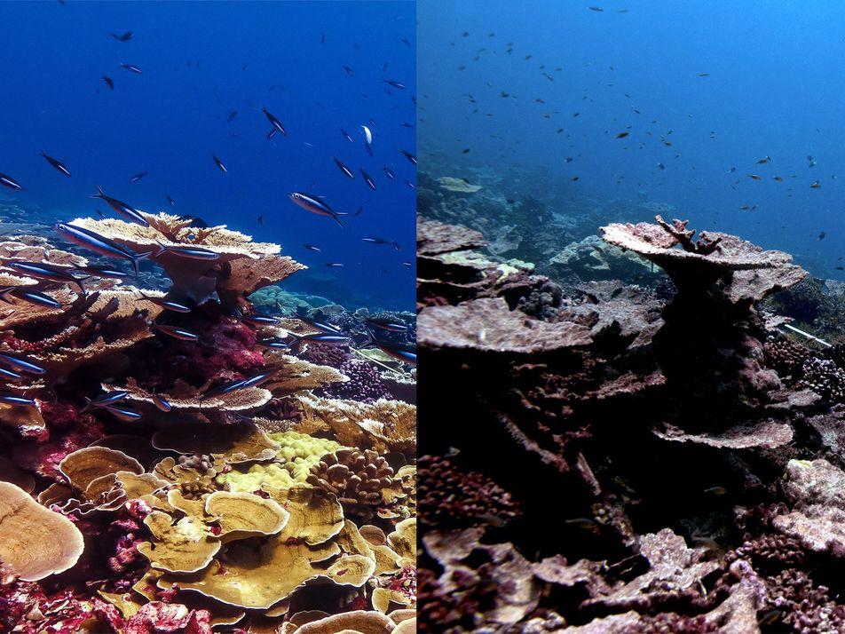 Se nos agota el tiempo para salvar a los arrecifes de coral del mundo