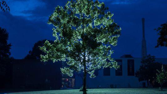 Estos árboles viajaron al espacio y ahora viven en la Tierra