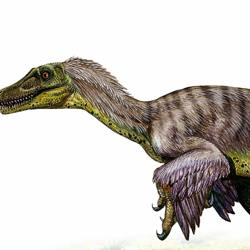 Por qué el velocirráptor es uno de los dinosaurios más incomprendidos