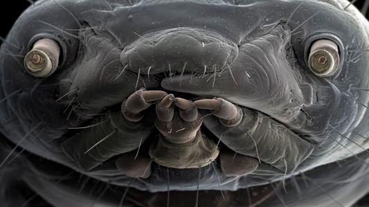 Estas fotografías revelan el extraordinario mundo de la vida microscópica