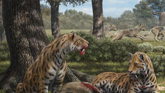 Los fósiles del dientes de sable cambian la historia del temible gran felino