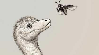 Revelan los primeros fósiles de embriones de tiranosaurio