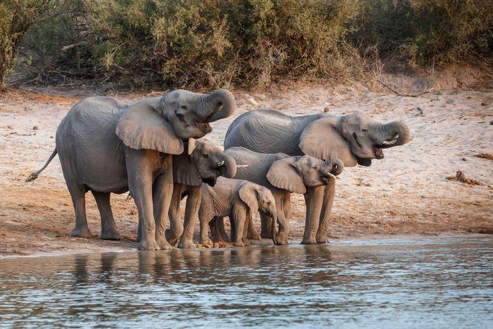 Fotografía de una familia de elefantes