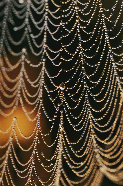 Una tela de araña orbicular bañada de rocío.