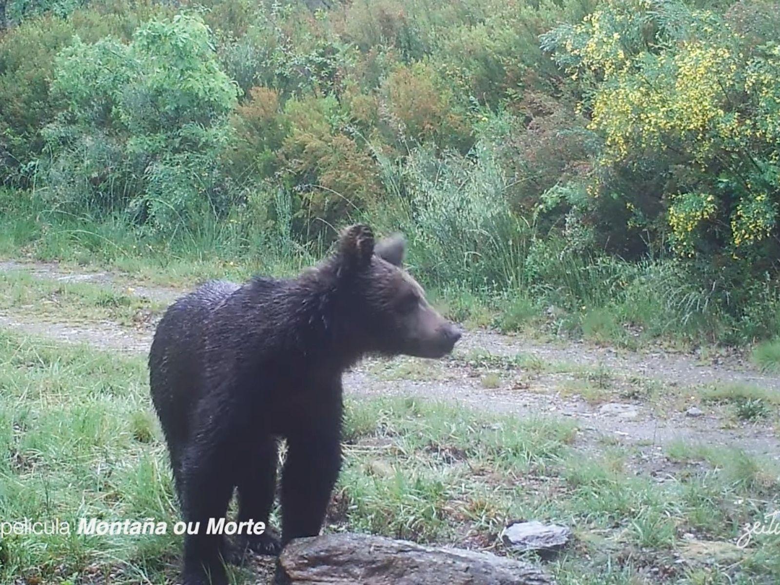 Las cámaras de 'Montaña ou morte' han grabado a este animal en el Parque Natural dos ...