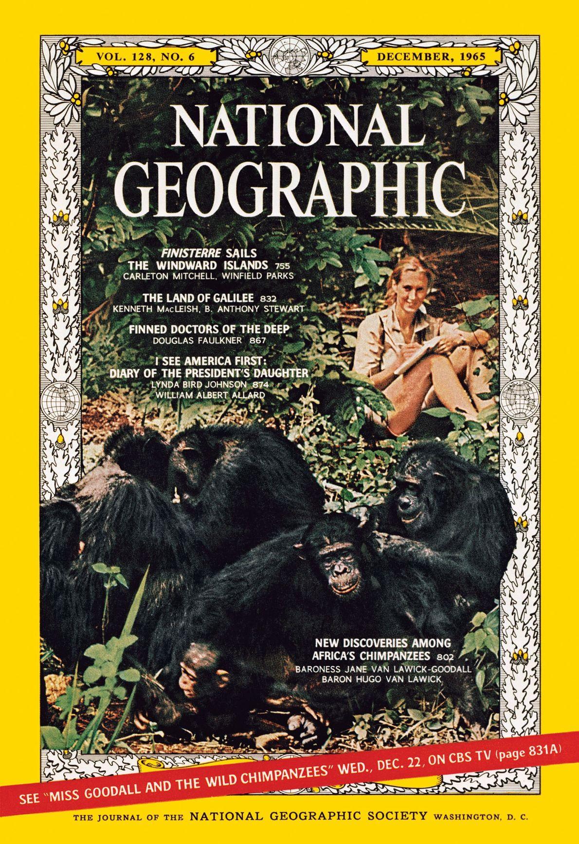 Jane Goodall y sus chimpancés
