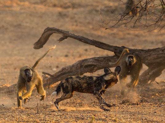 Los licaones del Zambeze