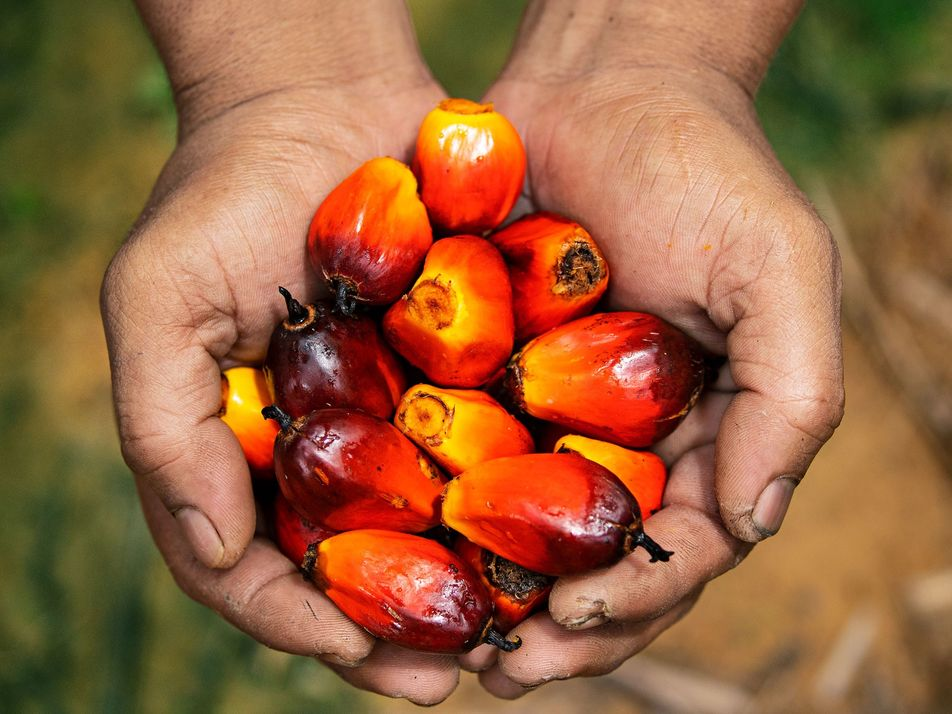 El aceite de palma destruye las selvas, pero ¿puedes pasar un día sin utilizarlo?