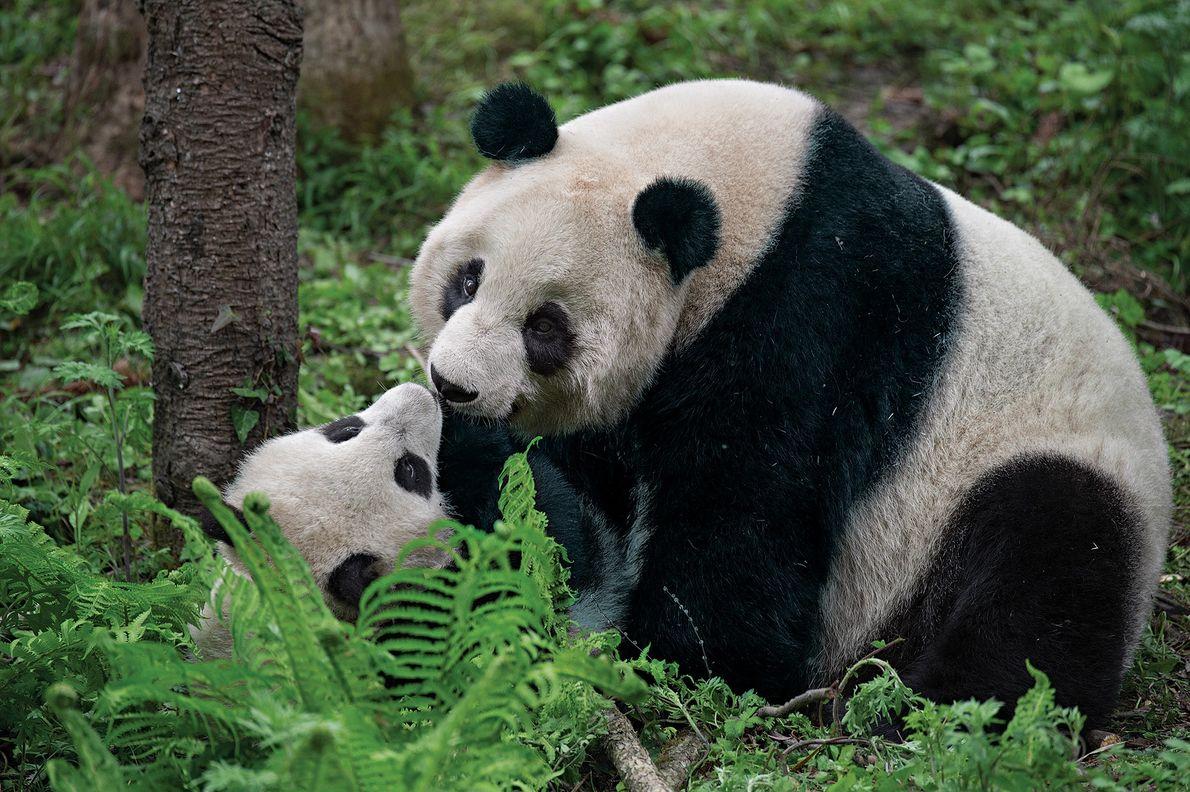 Una madre y su cría juegan