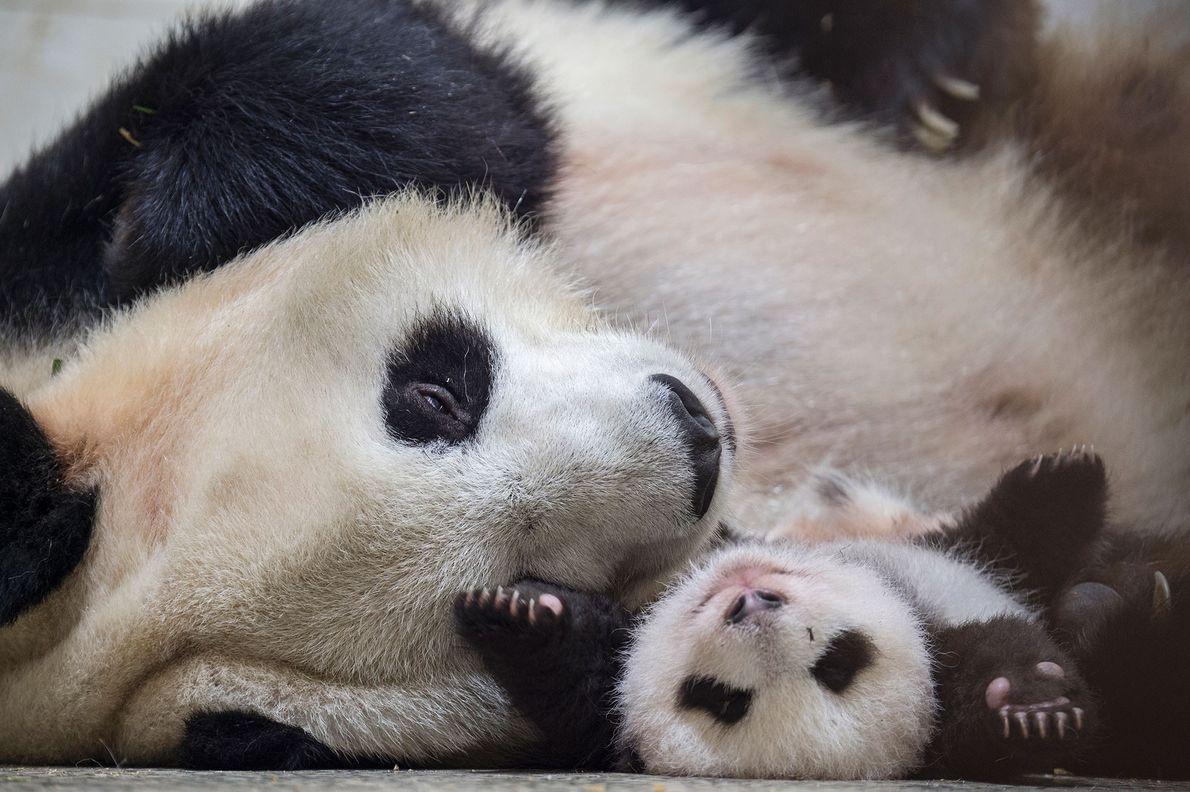 Ying Hua con su bebé