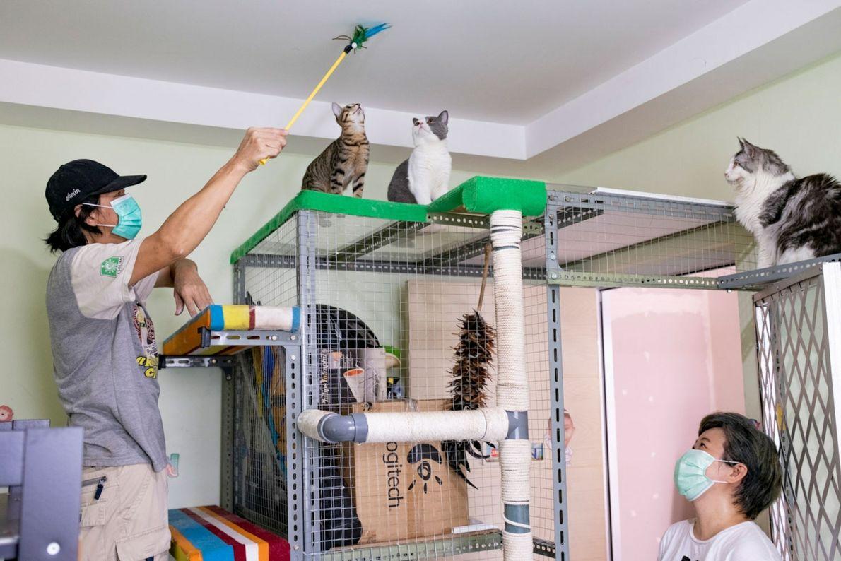 Suharmin intenta que sus gatos bajen