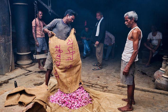 Un saco de rosas entregado a la fábrica de M.L. Ramnarain Perfumers