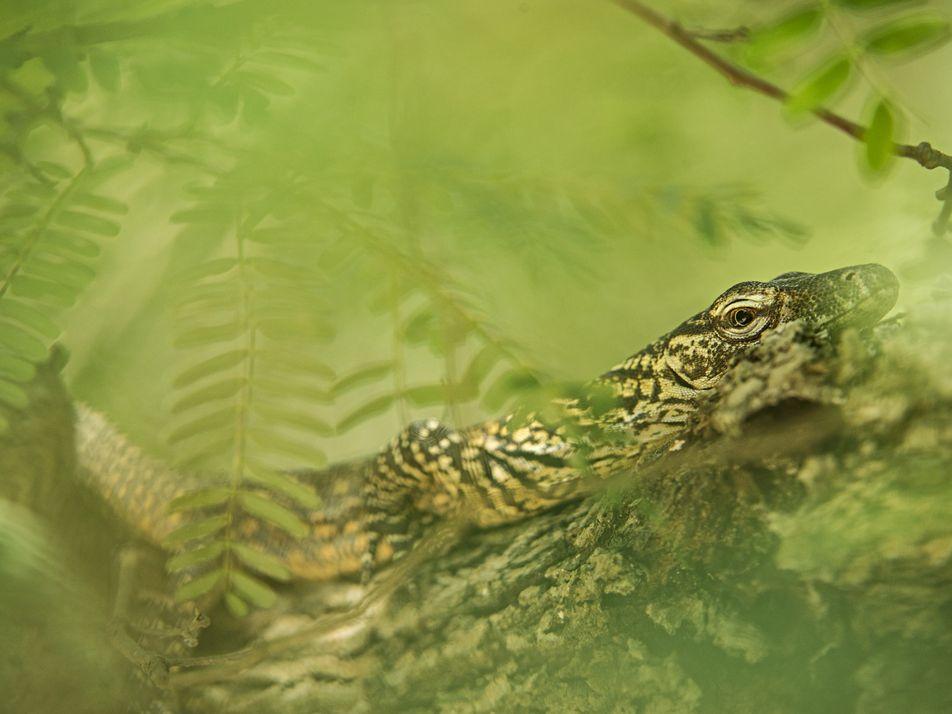 Algunos animales tienen «nacimientos virginales»: te explicamos la partenogénesis