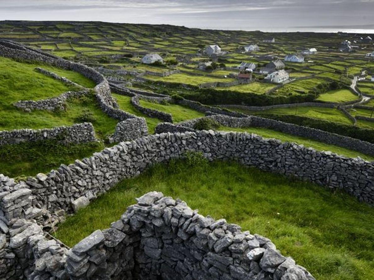 La Irlanda de los pastores