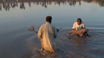 Uno de los delfines más raros del mundo se recupera en Pakistán