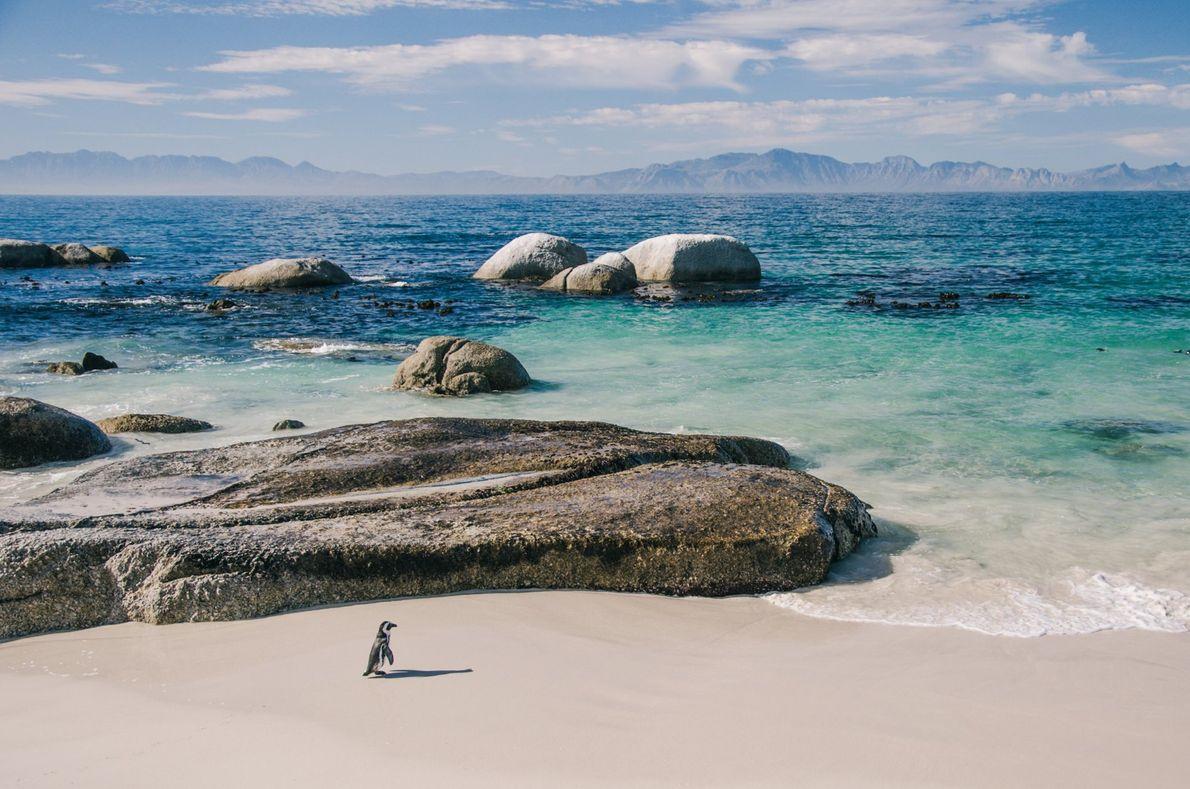 Playa Boulder, Sudáfrica