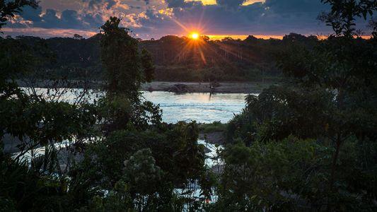 Los bosques: la solución olvidada contra el cambio climático