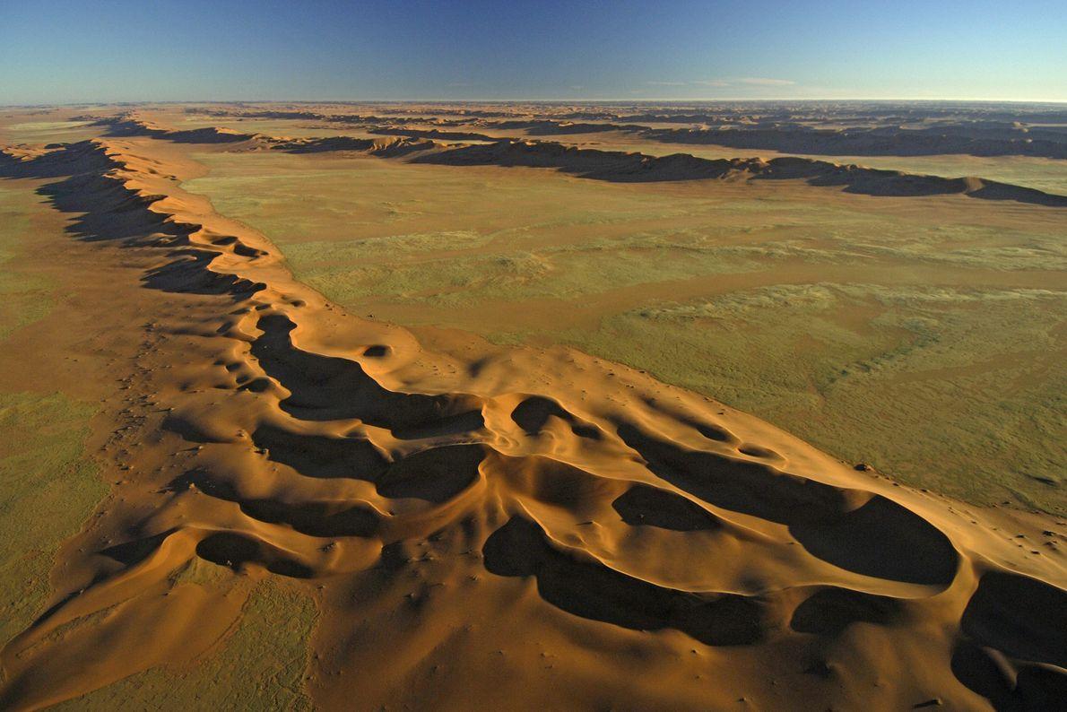 Las dunas están flanqueadas de un tono verdoso, lo que indica el efímero crecimiento de hierba ...