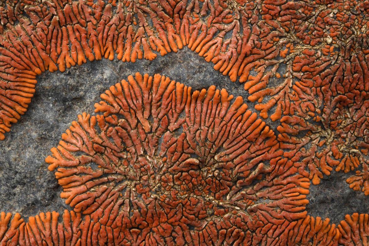 El liquen del desierto del Namib