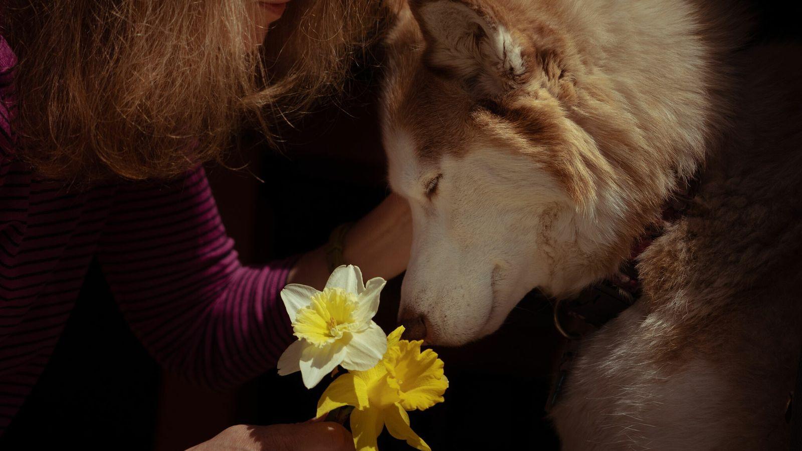 Fotografía de un perro de terapia llamado Casey