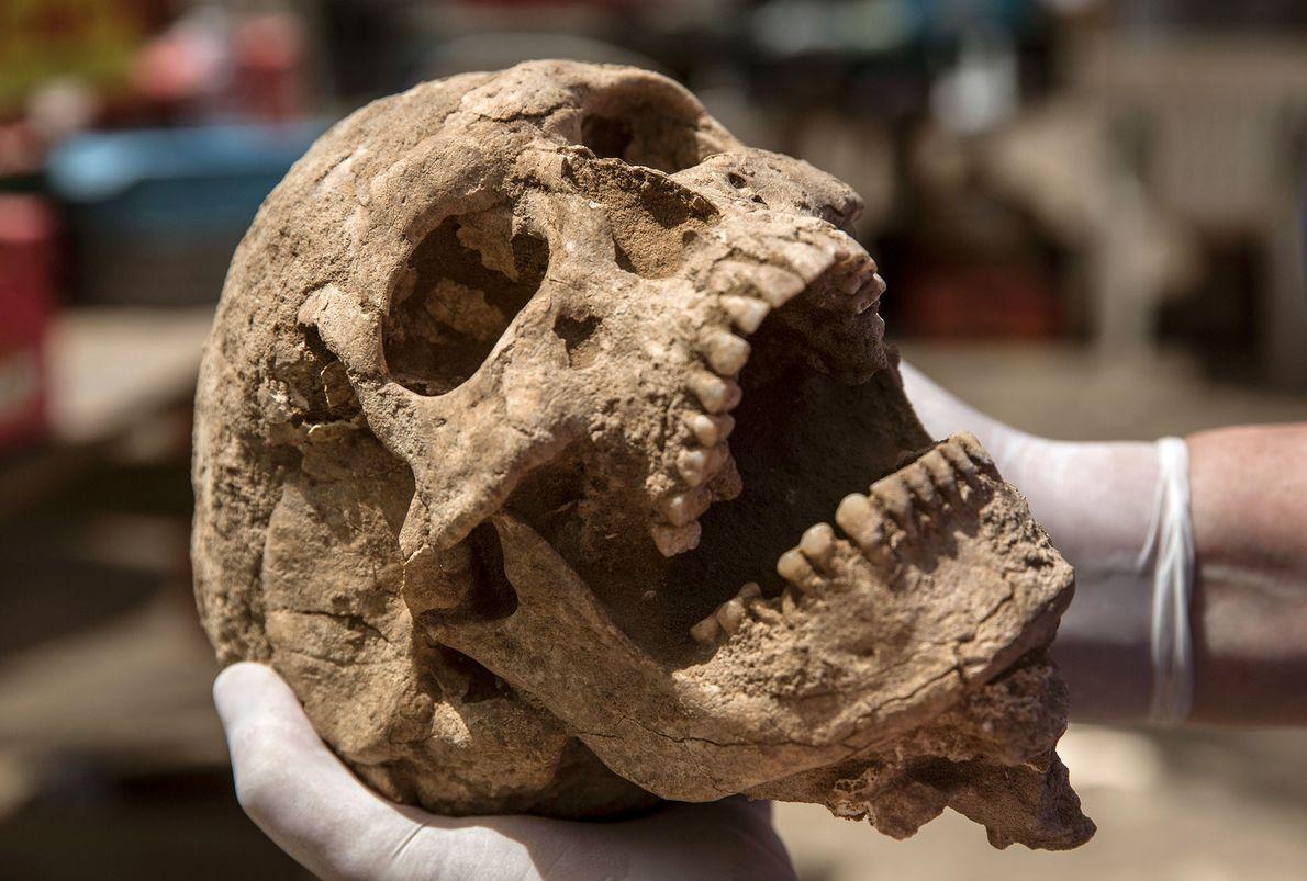 Cráneo filisteo