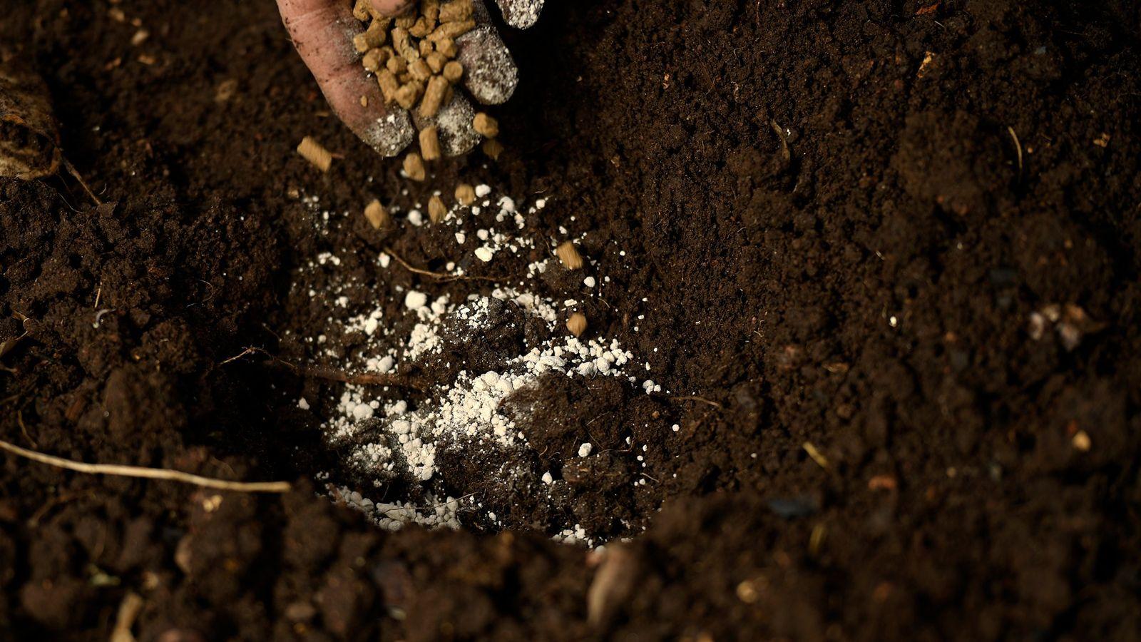 Un agricultor extiende fertilizantes orgánicos