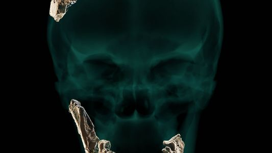 El hallazgo de un cráneo misterioso podría apuntar a un antepasado humano desconocido hasta ahora
