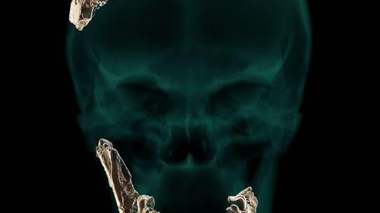 Restos del cráneo de Nesher Ramla