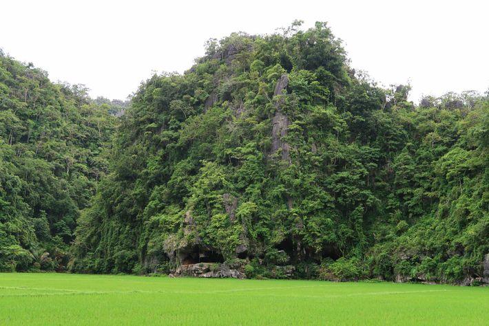 Cueva de Leang Tedongnge