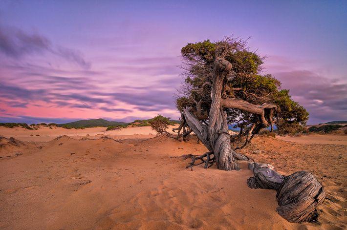 Imagen del Árbol de los Cuentos de Hadas en las dunas de Piscinas, Arbus, Sardinia