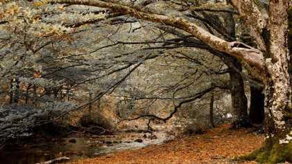 Castañas, senderismo y mucho más: estos son los mejores planes de este otoño