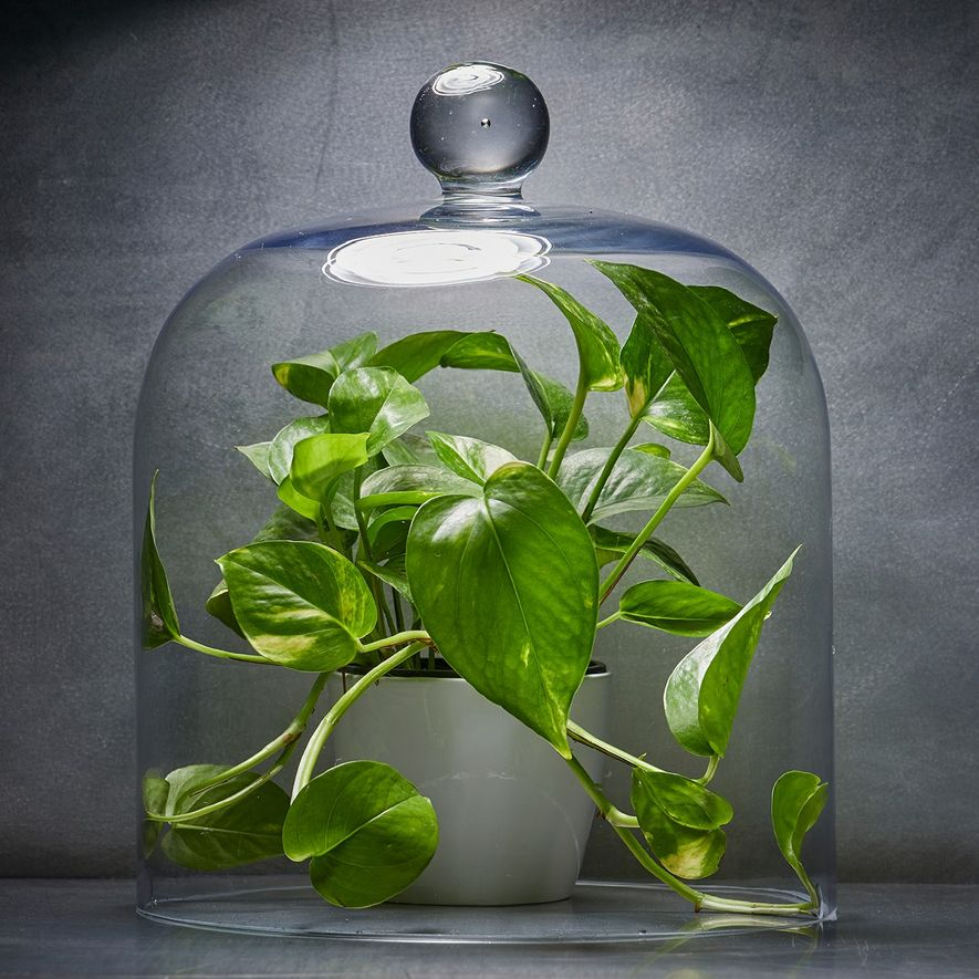 ¿Qué plantas de interior puedes comprar para purificar el aire de tu casa? Ninguna.
