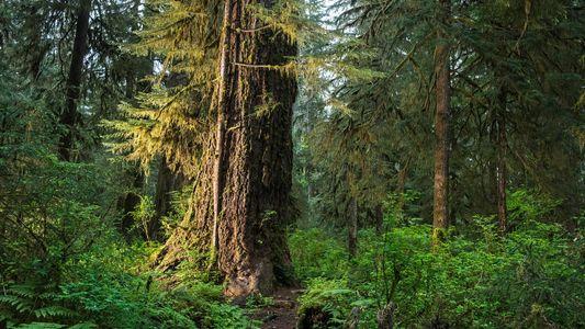 ¿Hasta cuándo absorberán las plantas nuestro carbono?