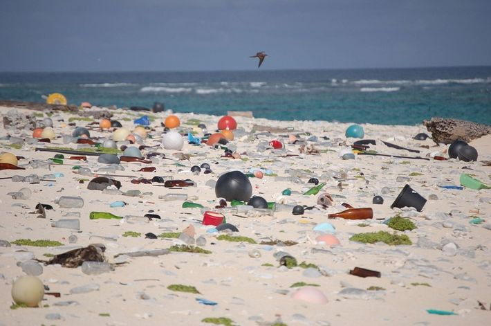 Residuos Plásticos 02