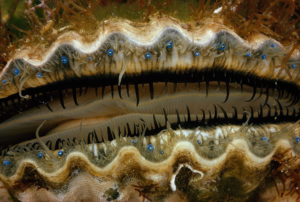 Eye, Eye