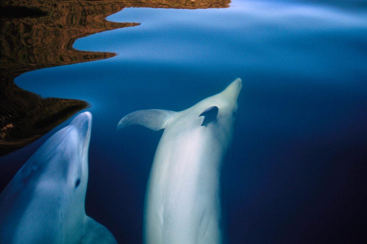 Delfines en Doubtful