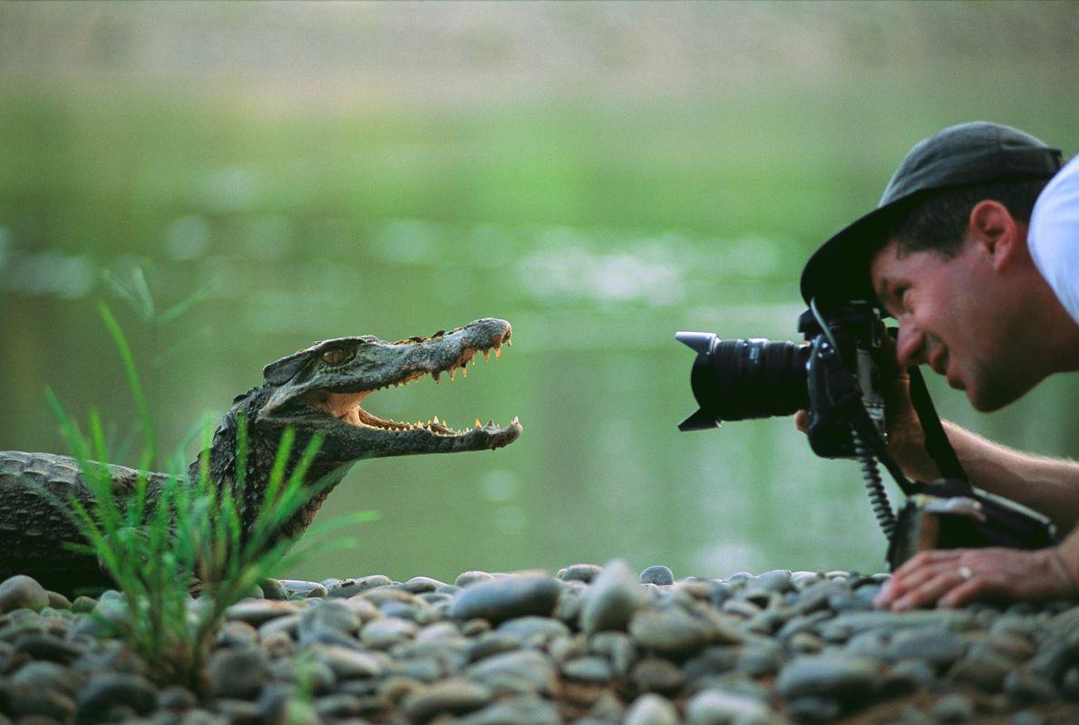 Cría de caimán, Bolivia