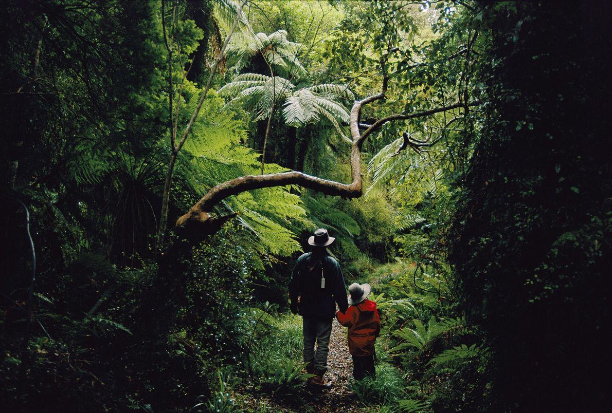 Imagen de unos senderistas que examinan un árbolen un bosque de Nueva Zelanda