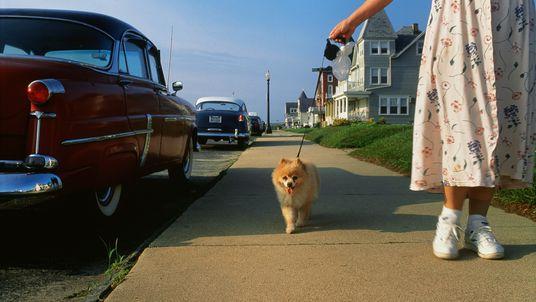 Imagen de una mujer paseando a su perro junto a unos coches clásicos