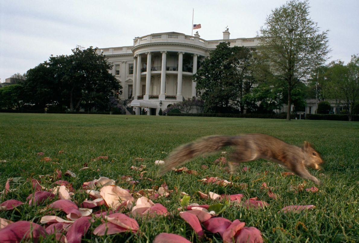 Ardilla en la Casa Blanca