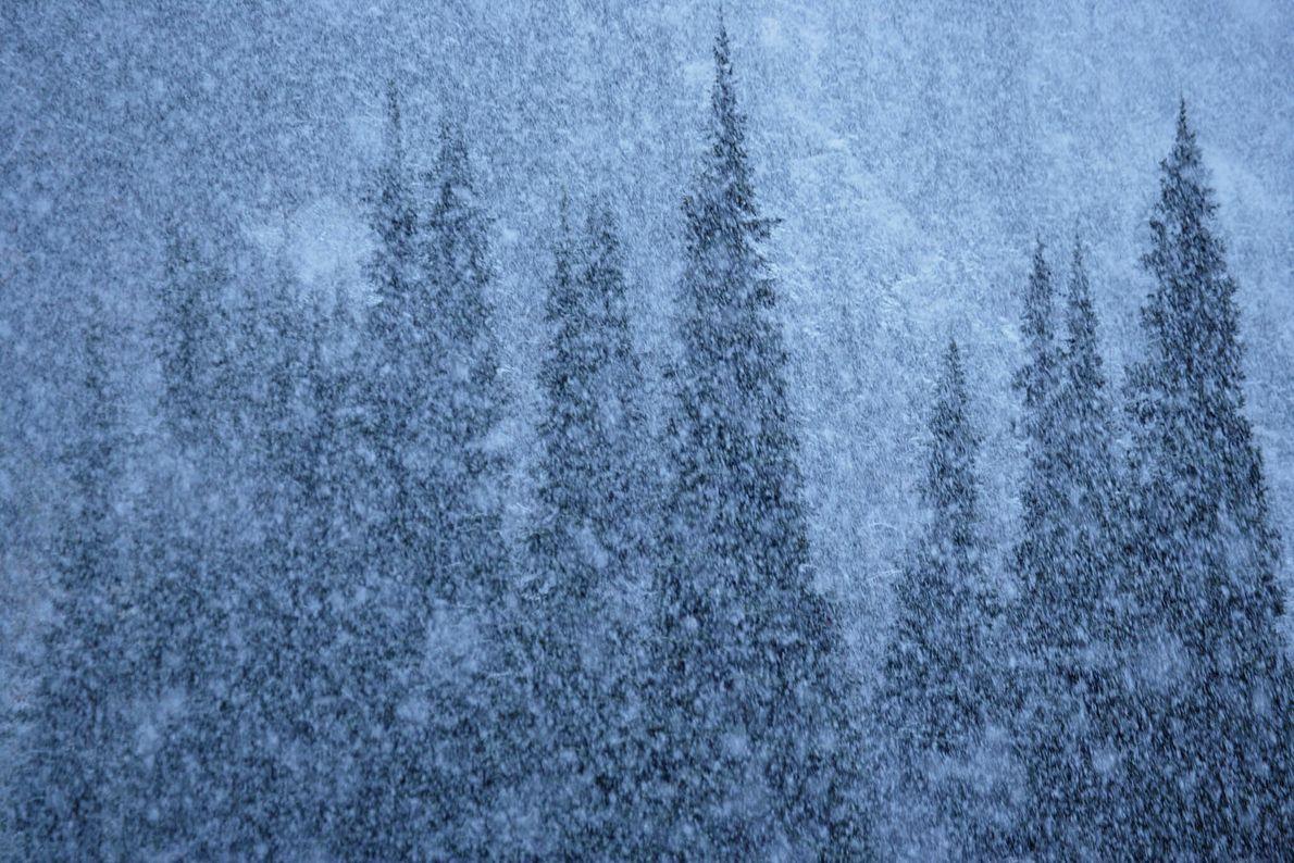 Nieve en verano
