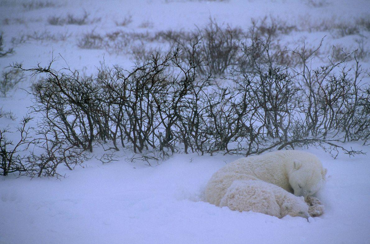 Siesta en la nieve