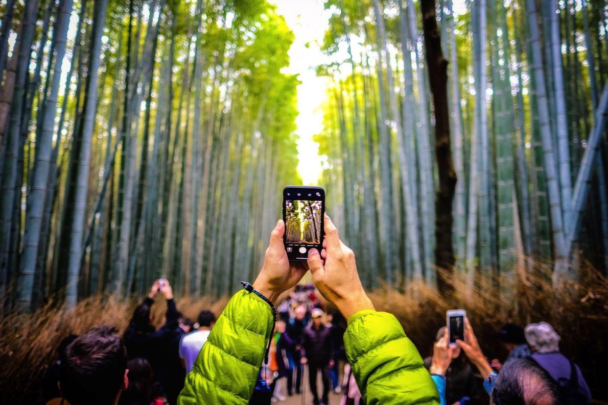 Picture of the Arashiyama Bamboo Grove in Kyoto, Japan