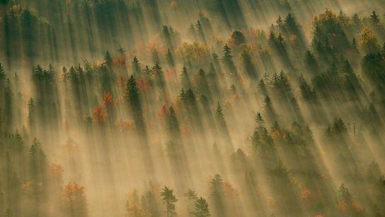 Imagen de la bruma levantándose en un bosque del Parque Nacional de Acadia