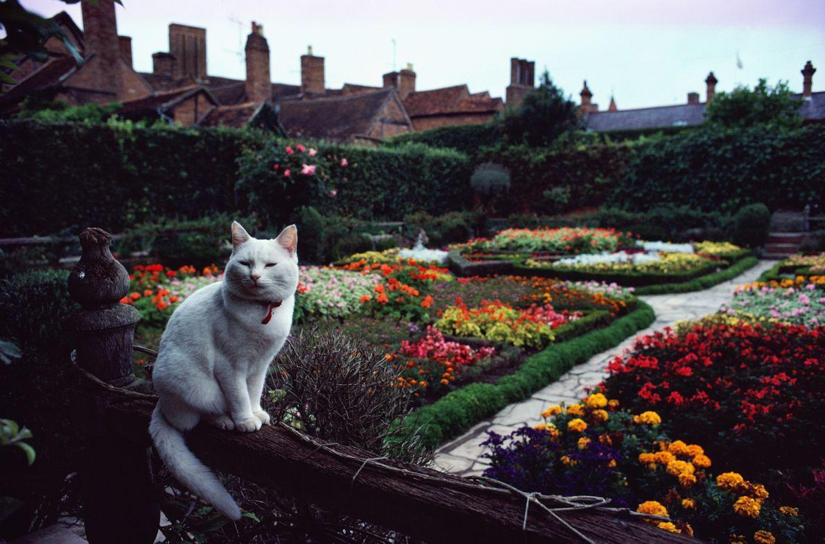 Imagen de un gato blanco sentado en una valla frente a un pintoresco jardín en Stratford ...