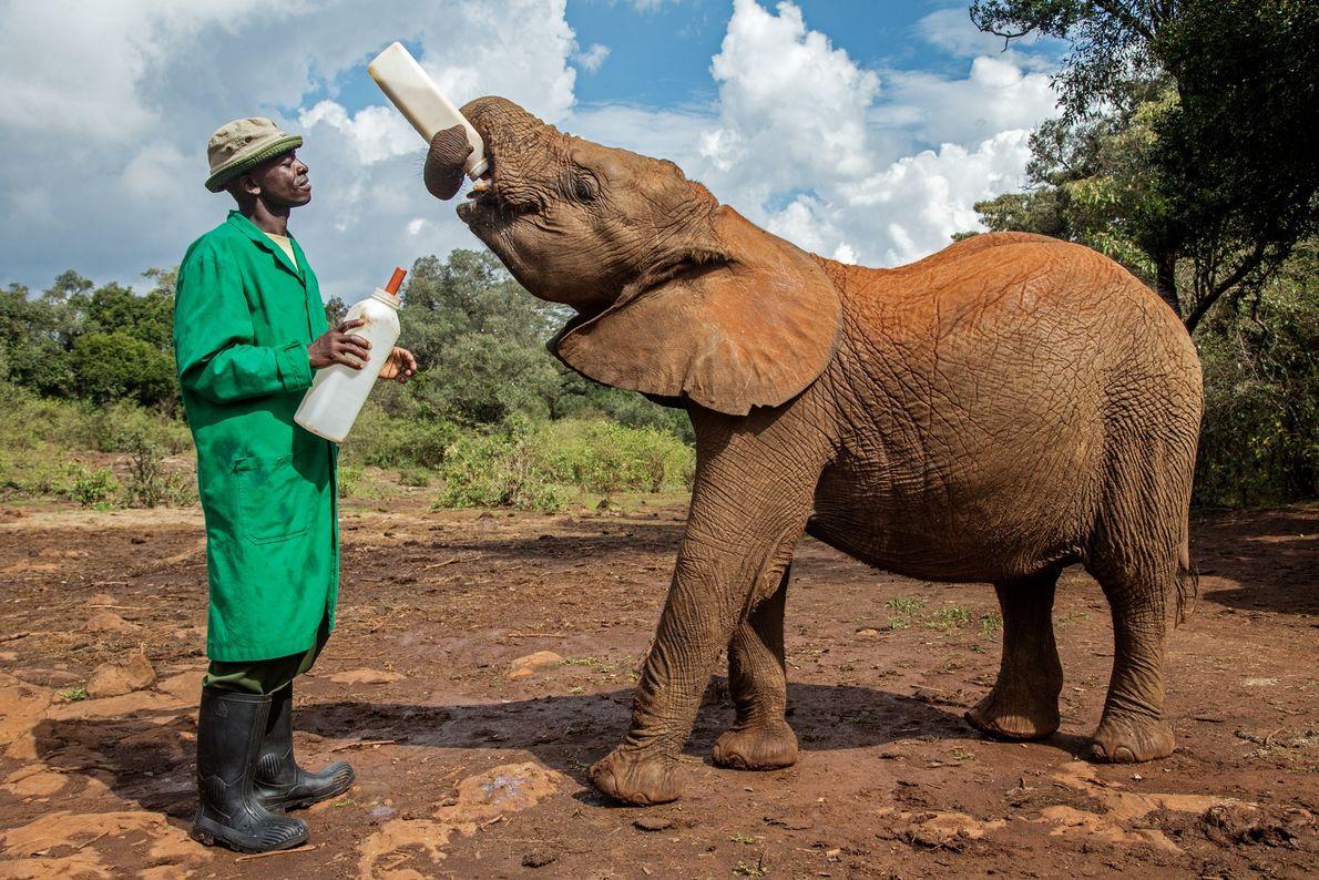 Elefante huérfano