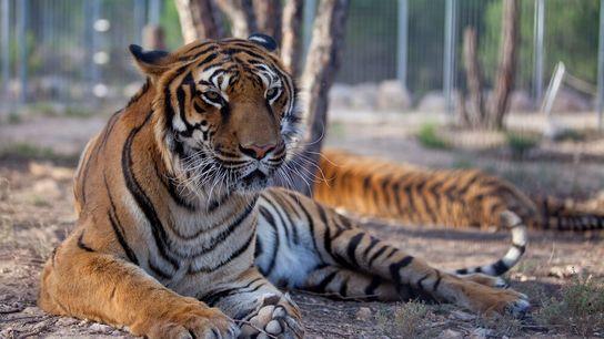 El trabajo diario en AAP Primadomus pasa por rescatar y rehabilitar a los animales que llegan ...